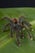 spiders Anxiety Behavioral and Cognitive Strategies psychology continuing education